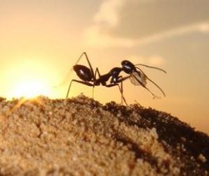 چطور در خانه از دست مورچهها خلاص شویم؟
