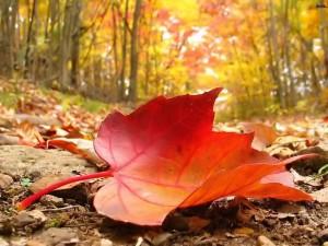پاییز هزار رنگ….