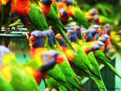 دنیای پرندگان – سری اول