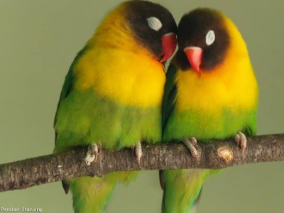 دنیای پرندگان – سری سوم